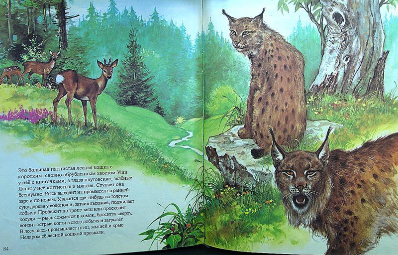 Зоология в картинках барков